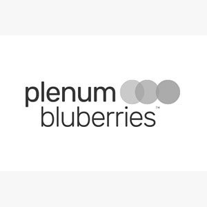 plenum bluberries